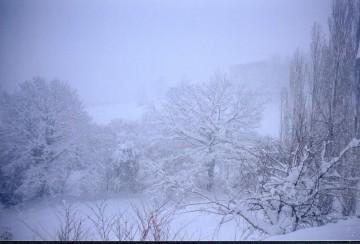 medium_neige_c.jpg