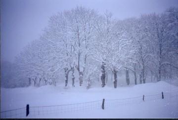 medium_neige_d.jpg
