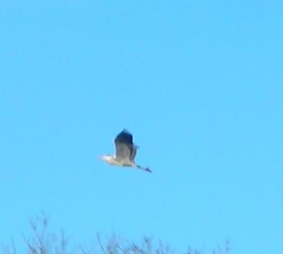 Oiseau 2.JPG